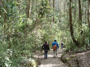 Caminatas y campamentos educativos
