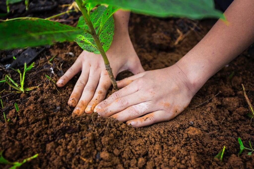 Siembra y reforestación