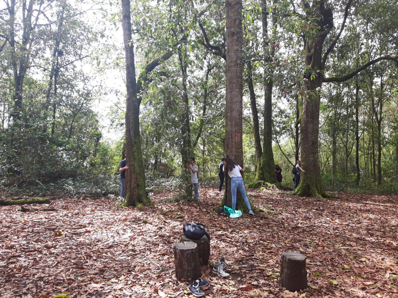Bosque de robles Quininí