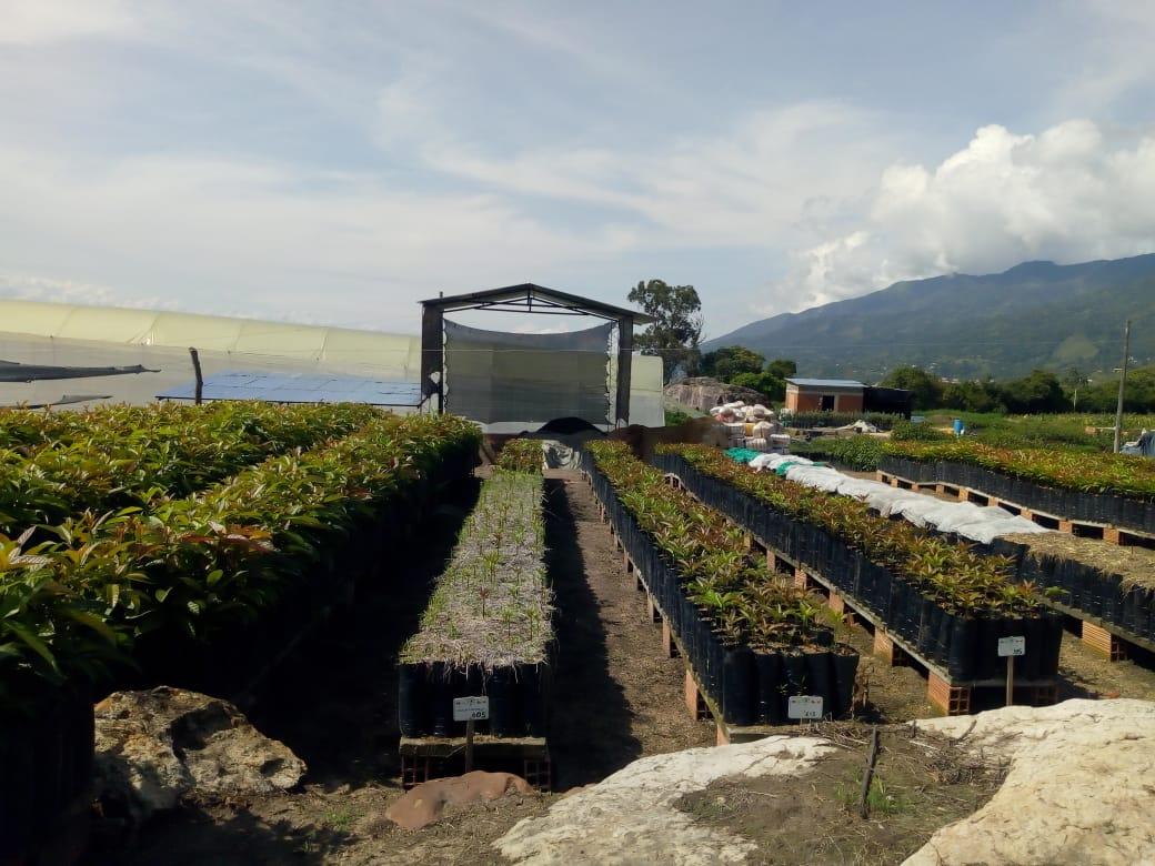 Taller de cultivos - talleres pedagógicos