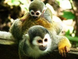 Conociendo el parque natural amacayacu