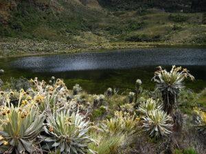Conociendo el Santuario del Iguaque fauna y flora del Iguaque